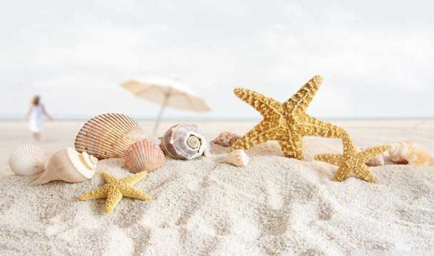 Calcium Carbonate from Seashells Useful Against Osteoporosis