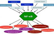 NF-κB transcription factor in Cerebral Ischemia Reperfusion