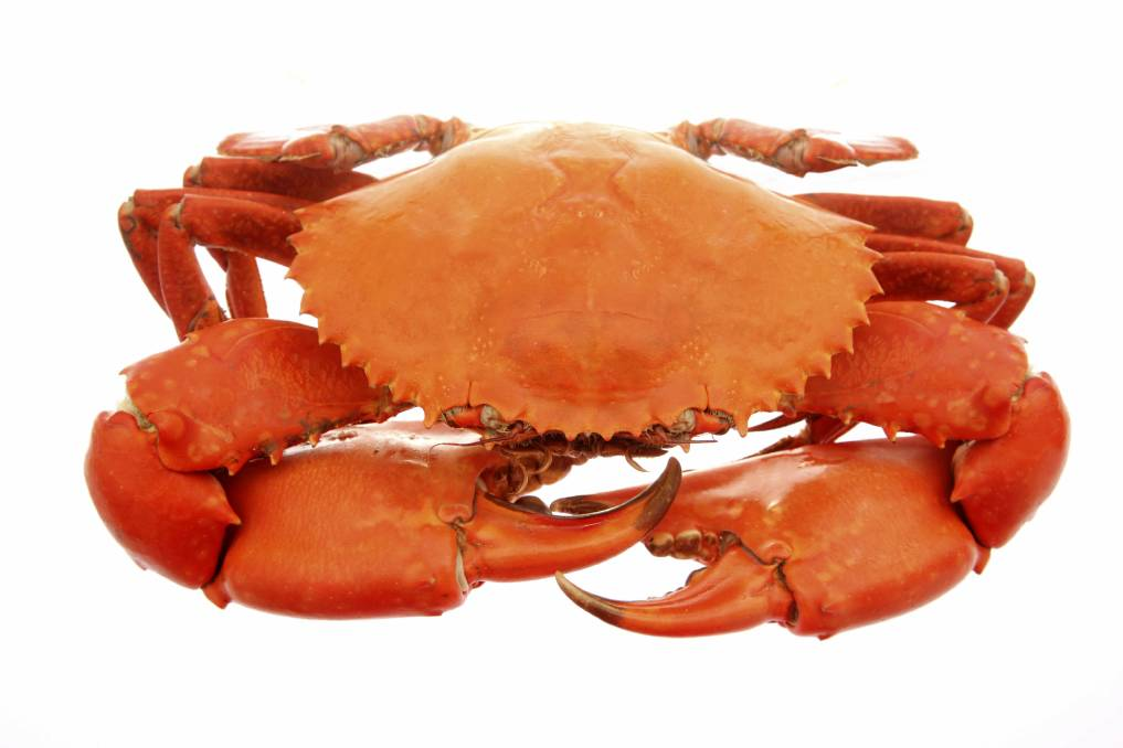 Assessment of Age and Development of Orange Mud Crab