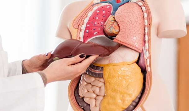 New Compounds to Reverse Liver Aging Process