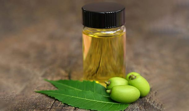 Evaluation of Potential of Essential Oil of Neem Giloy Against Pathogenic Fungi