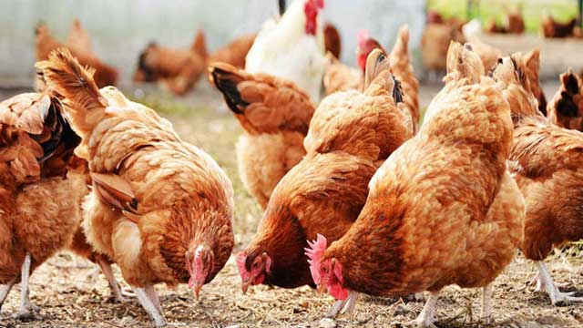 Applications of Resveratrol in Animal and Poultry Nutrition