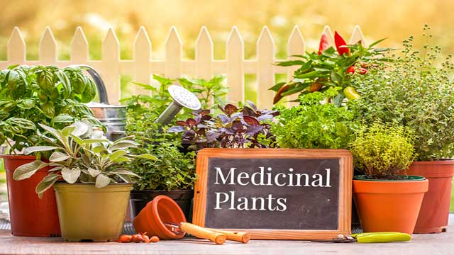 Biochemical Properties of Some Medicinal Plants