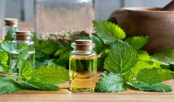 Protective Effects of Lemon Balm in Brain Strokes