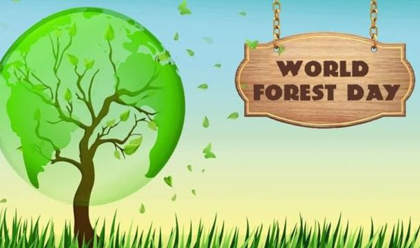 Learn to Love Trees on Int'l Day of Forests