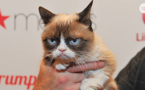 The Grumpy Cat Which Was Seen To Be Used Widely In Memes Dies