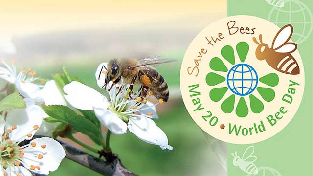 World 'Bee' Day Observed to Raise Awareness on Crucial Role of Bees