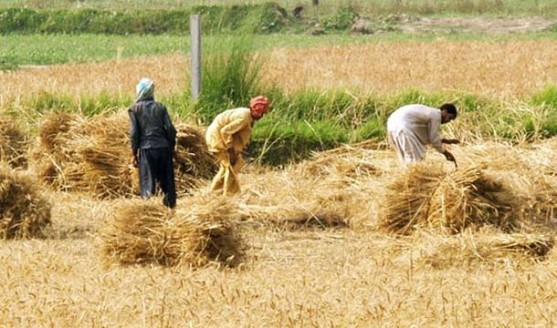 Agriculture Contributes in 80% of Country's Foreign Exchange