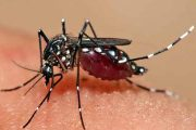 Health Dept Chalks Out Action Plan For Dengue Prevention