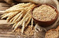 Wheat Export Banned by ECC.