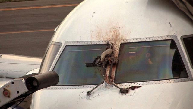 More Than 34 PIA Planes Affected By Bird Strikes in 7 Months