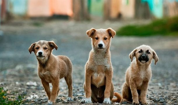 Resolution Presented to Sindh Assembly about Export of Stray Dogs to China, Philippines