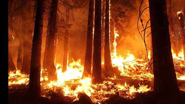 Amazon On Fire, Brazil and France Clash Over Burning Rainforest