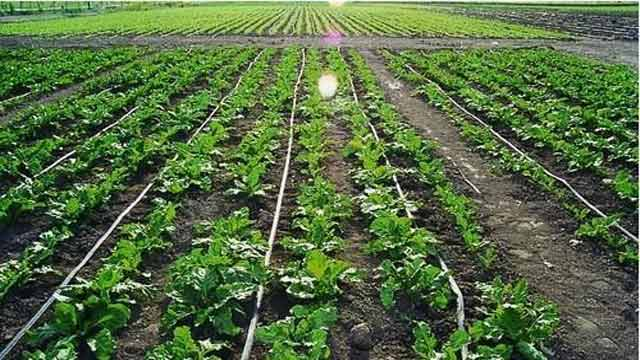 Drip Irrigation System Save Up To 50% of Water
