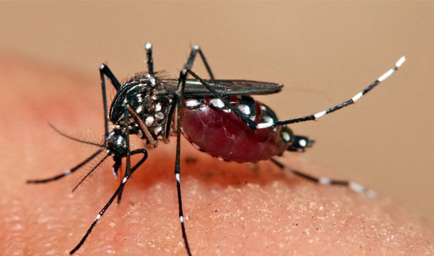 KPK and Punjab Reported 107 and 459 Cases of Dengue Fever Respectively