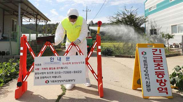 South Korea on High Alert After Swine Fever Found