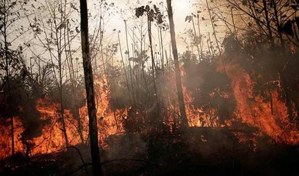 Wildfires in Bolivia's Forests, Destroyed 1.7M Hectares