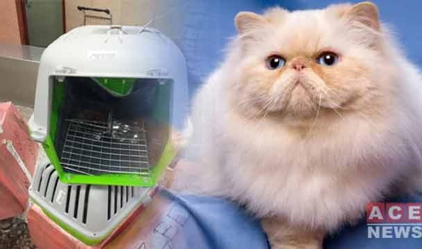 Passenger Creates Ruckus as Expensive Cat Goes Missing from Airplane Cargo