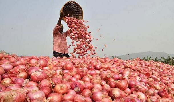 Onion Prices In South Asia Rise After India Bans Export