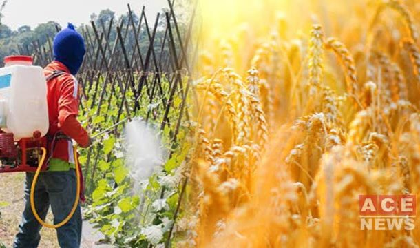 Nitrogen Can Enhance the Efficiency of Wheat in Rice-Based Cropping Pattern