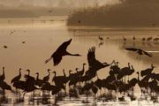 69% Reduction In Migratory Birds Coming To Punjab