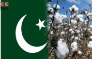 Pakistan Needs Concrete Plan to Increase Cotton Production