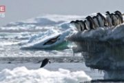 Antarctica registers record temperature of over 20c