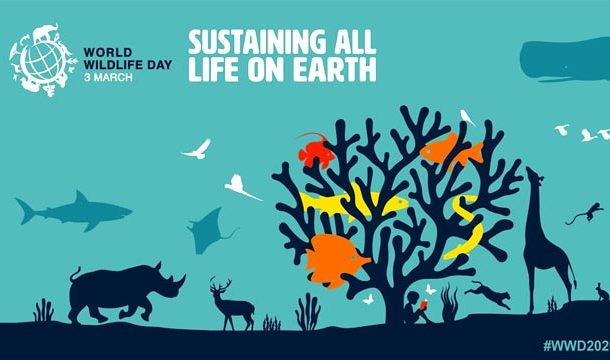 World Wildlife Day being Observed Today to Fight Against Wildlife Crime