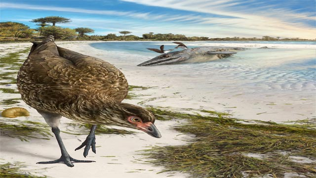 Fossil from Belgium 'Wonderchicken ' Shows the Birth of Modern Birds