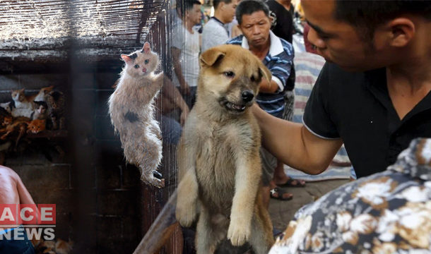 China: Shenzhen Bans Eating of Dogs and Cats