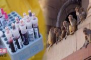 Monkeys Snatched Covid-19 Patients Blood Samples from Lab in India
