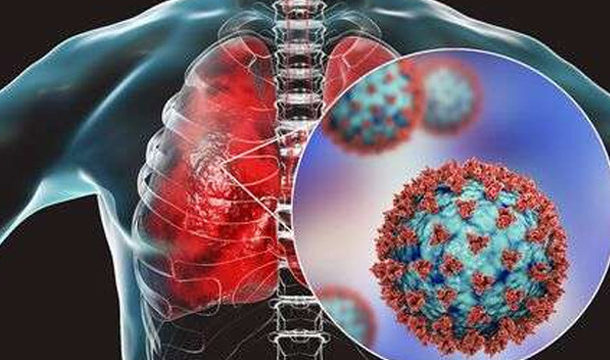 Scientists are Concentrating on how Immune System T Cells Battle Corona virus Without Antibodies