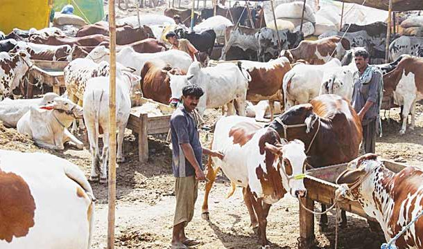 Govt of Punjab Launches App for Online Purchase of Sacrificial Animals