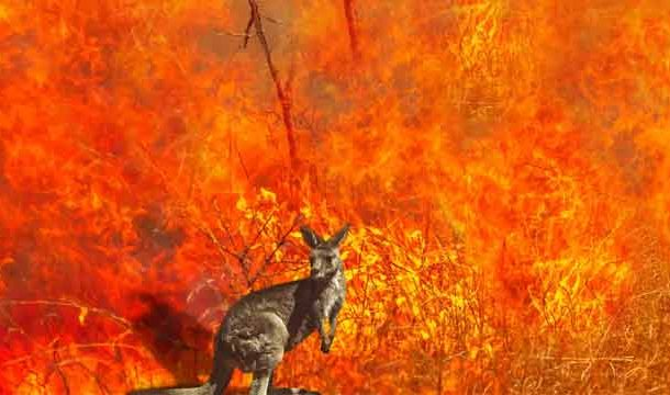 Approximately 3 Billion Animals Affected by Australia Bushfires
