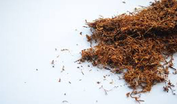 Pakistan Ranks Second Among Countries Chewing Tobacco