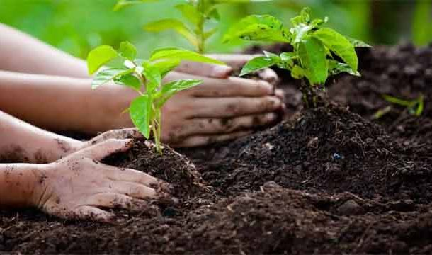 Foreign Ambassadors of Different Countries Participated in PM's Tree Plantation Drive
