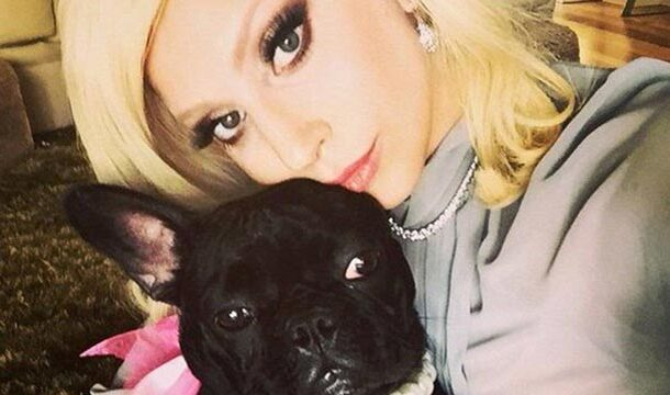 Lady Gaga's Dogs were Safely Rescued After an Armed Robbery