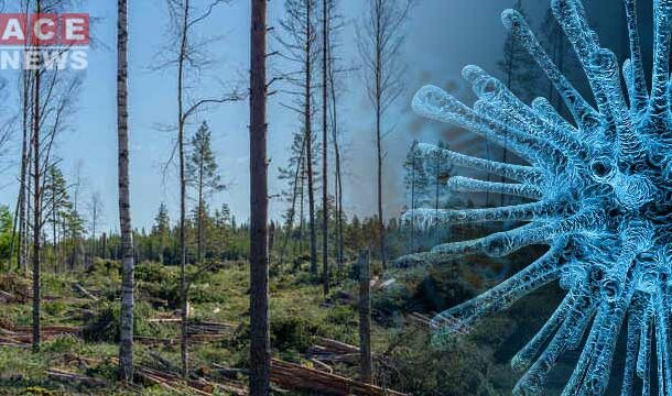 Infectious Diseases Spreading As The Result Of Deforestation