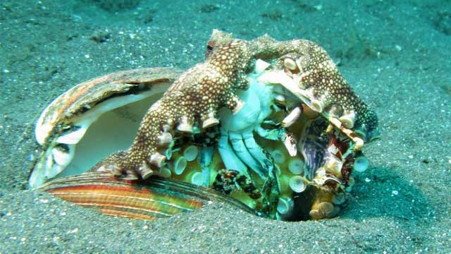 Octopus Killed a Crab - Video Goes Viral