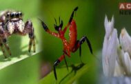 Watch: Encounter Between Kung Fu Mentis and Jumping Spider But the Winner will Surprise You