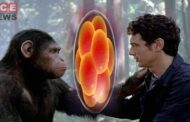 Scientists Generates Monkey Embryos Containing Human Cells