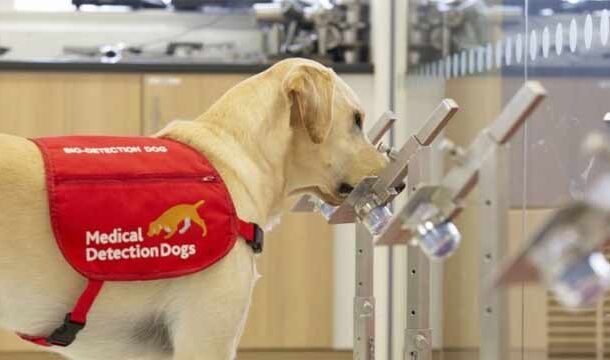 Islamabad Airport Deploys COVID-19 Sniffing Dogs