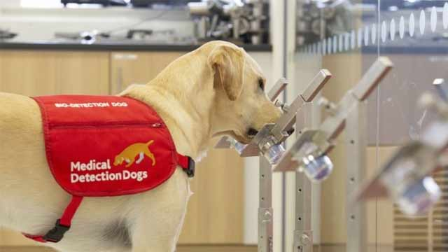 Peshawar Airport: Sniffer Dogs Detects 24 More Coronavirus Patients