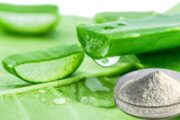 Therapeutic Effect of <i>Aloe vera</i> Powder and Gel in Diabetic Rats